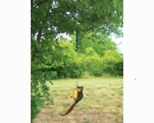 Songbird Essentials SQUNGEE FEEDER / BUNGEE JUMPER SQUIRREL ENTERTAINER