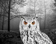 Gray Orange B&W Room Decor Owl Wildlife Wall Art Photo Print Bedroom Matted Pic.