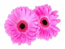 NATURE FLOWER PINK PETAL GERBERA PLANT POSTER ART PRINT PICTURE BB112A