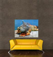 POSTER PRINT GIANT PHOTO NATURE ANIMAL IGUANA LIZARD REPTILE DRAGON PAMP299