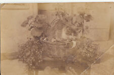 REAL PHOTO POSTCARD CAT IN A BASCKET (lower right corner creased)