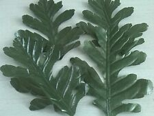40 EXTRA LARGE GREEN /OAK LEAVES WEDDING/ DECORATION/CRAFT/ART/COSTUMES/CONFETTI