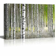 Canvas Prints Wall Art - Birch Trees in Bright Sunshine in Late Summer - 24 x 36