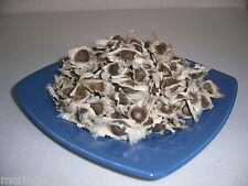 50 echte Moringa PKM1 Samen, frische Ernte 03/2016, PREMIUM Qualität Seeds