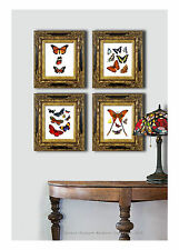 Set of 4 Antique Butterfly Prints Home interior decor pictures bedroom wall art