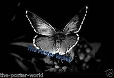 Black & White Image of a Butterfly Animal Wildlife Nature Picture Poster Art New