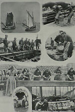 Herring Fishing Landing Cleaning Salting Barrel Yarmouth 1903 Photo Article 7817
