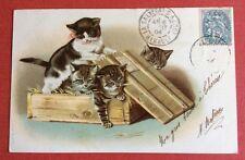 CPA. 1904. Petits Chats Jouant dans une caisse. Illustrateur Helena Maguire ?