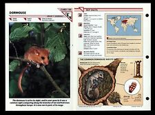 """DORMOUSE"" WILD LIFE FACT FILE ANIMAL CARD/HOME SCHOOL STUDY"