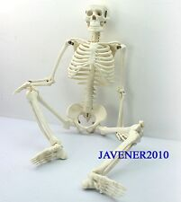 85cm Human Anatomical Anatomy Skeleton Medical Model +Stand Fexible