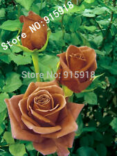 Flower seeds 50pcs Coke rose Bonsai Flower Plant Seeds Semillas de Flores.Lover