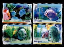 Diskusfische. 4W. Weißrußland 2006
