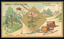 Chromo Guérin Boutron Botanique plante fleur rose jardin ombrelle garden
