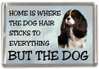 "Cavalier King Charles Dog Fridge Magnet ""Home is Where"" Design No 4 by Starprint"