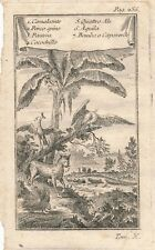 Africa Bellin animals engraving Prevost Histoire Generale Voyages 1750 Italian