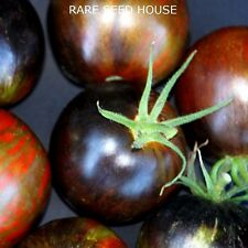 Cosmic Eclipse Tomato Seeds - Comb. S/H - See our store for 800 kinds of seeds!