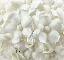 50 Small White Mulberry Paper Flowers Scrapbook Wedding Decor DIY Crafts S15-15