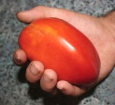 HOG HEART TOMATO! HEIRLOOM ! LONG & FAT WITH GREAT FLAVOR! 20 SEEDS! !