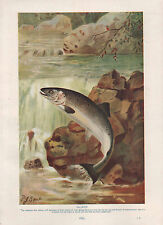 1911 NATURAL HISTORY DOUBLE SIDED PRINT ~ SALMON / CHIMAERA