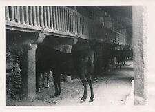 ÎLE DE MAJORQUE c. 1935 - Les Écuries  Monastère de Lluc  Espagne - P 512