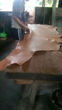 tree bark vegetable tanning tanned hide leather