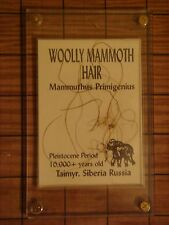 "Mammoth Hair in 3"" X 5"" plexiglass case.  Information on back"