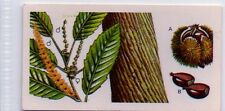 #42 Sweet or Spanish Chestnut (leaf and seed) - Trees in Britain Card