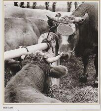 1990  --  A LA FOIRE SAINT MATHIEUX DE HOUDAN   3H435
