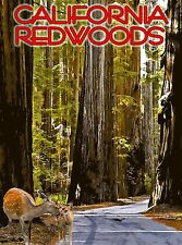California Redwoods Redwood National Park America Travel Advertisement Poster