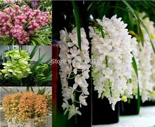100 Pcs Chinese cymbidium Seed balcony seeds bonsai 8 kinds garden flower orchid