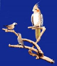 Parrot Perch Pet Bird Stand Perch Natural Wood Multi Branch Extra Small