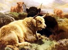8x10 print Shaggy Long Horn Scottish Highland Cattle Kyloe Bull Cow @ Glen Loch