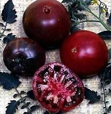 Black Russian Tomato Seed