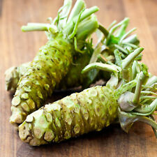Best Seeds Of  Wasabi 200 Seeds Japanese Horseradish Sushi Ingredient Herb Spice