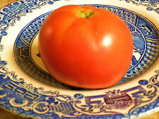 """Super Sioux """"Heirloom"""" Tomato 25 Seeds -- Sets Fruit in Heat and Dry Spells"""