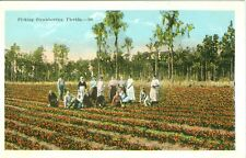 Florida,   Strawberry Fields Forever, Pickers Posing