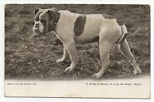 BULLDOG OLD DOG PICTURE POSTCARD  FROM 1903