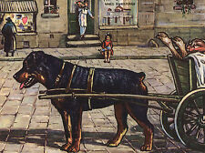 ROTTWEILER PULLS DOG CART LOVELY VINTAGE IMAGE ON  GREETINGS NOTE CARD