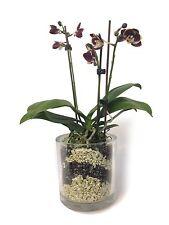 (4,99 1 L) Colomi Orchideengranulat, jade und schwarz, 4 Liter Beutel, neu