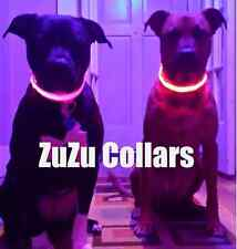 XL Orange LED Dog Collar - Dog Visibility, Light-up Puppy Tags, Safety Collar