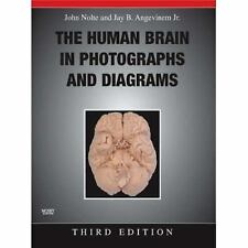 The Human Brain in Photographs and Diagrams by Jay B., Jr. Angevine and John...