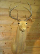 Drop Tine Real Wild White Tail Deer Rack Antler Horn Taxidermy Mount WT17