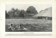 1917 Drying Cloves In Zanziba On Mats In The Sun