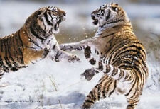SIBERIAN TIGERS - NATURE POSTER 24x36 ACTION 1373