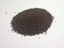 SENAPE nera semi di Grado A PREMIUM Qualità Spedizione gratuita nel Regno Unito 100g