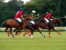 PoloSeason.com - Great Domain Investment-Sport of KINGS