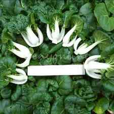 2000pcs Canton Chinese PAK CHOI Cabbage Seeds Organic Vegetable Food Garden