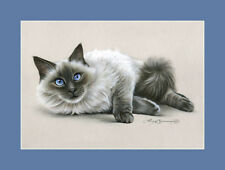 Ragdoll Cat Blue Eyes Print by I Garmashova