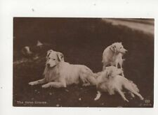 The Three Graces Dogs [Schwerdtfeger 2724/6] Vintage RP Postcard 143b