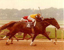 FOREGO 17 GREATEST RACES DVD HORSE OF THE YEAR 3 TIMES 76 MARLBORO CUP